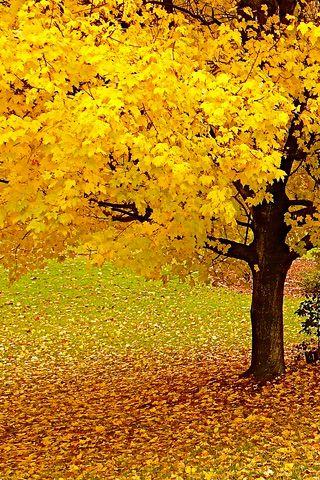 Bij de kleur geel denk ik aan.. | Herfst. Ookal kondigt het de koude wintermaanden aan, ik kan altijd nog even enorm genieten van de herfst. Je vind me dan regelmatig in het bos, als een kind sloffend door de gele en oranje bladeren. Een feestje! | Soraya