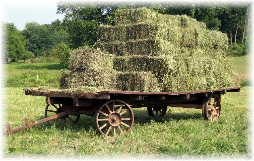 Compact Farm Wagons : Best amish life images on pinterest country