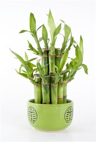 Tipy na nenáročné pokojové rostliny | Svět bydlení | Svět bydlení