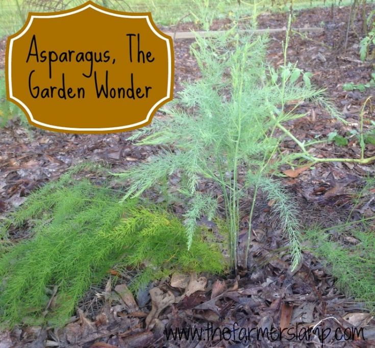 Best Place To Plant Asparagus: 13 Best Edible Front Yard Images On Pinterest