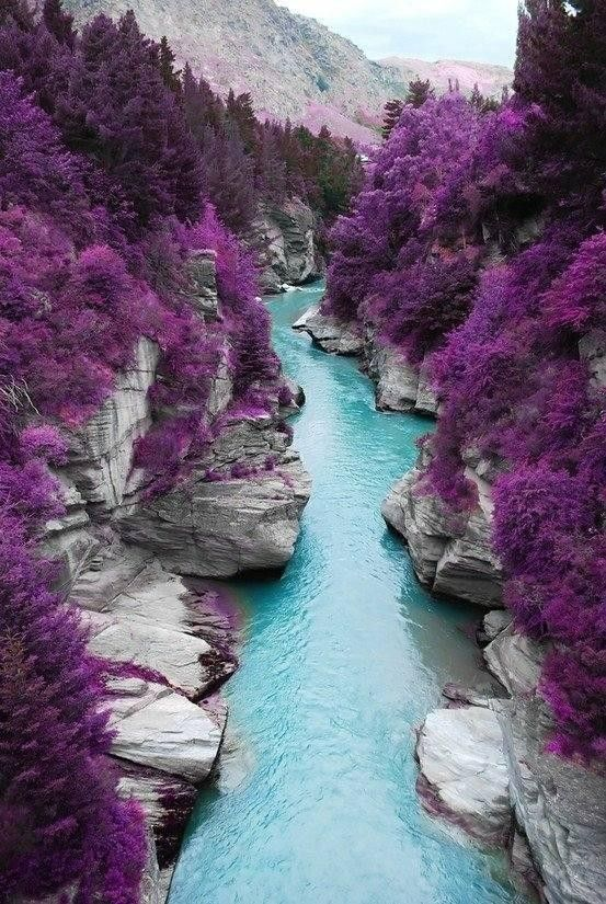 The Fairy Pools on Shotover River, New Zealand - this photo is actually not real, but it has been doctored to have purple trees.