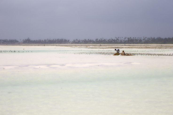 IB TREBBIEN – Seaweed Harvest 1