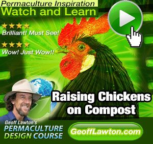 Utterly fascinating info on raising chickens on compost... TONS of other links and info here, too...