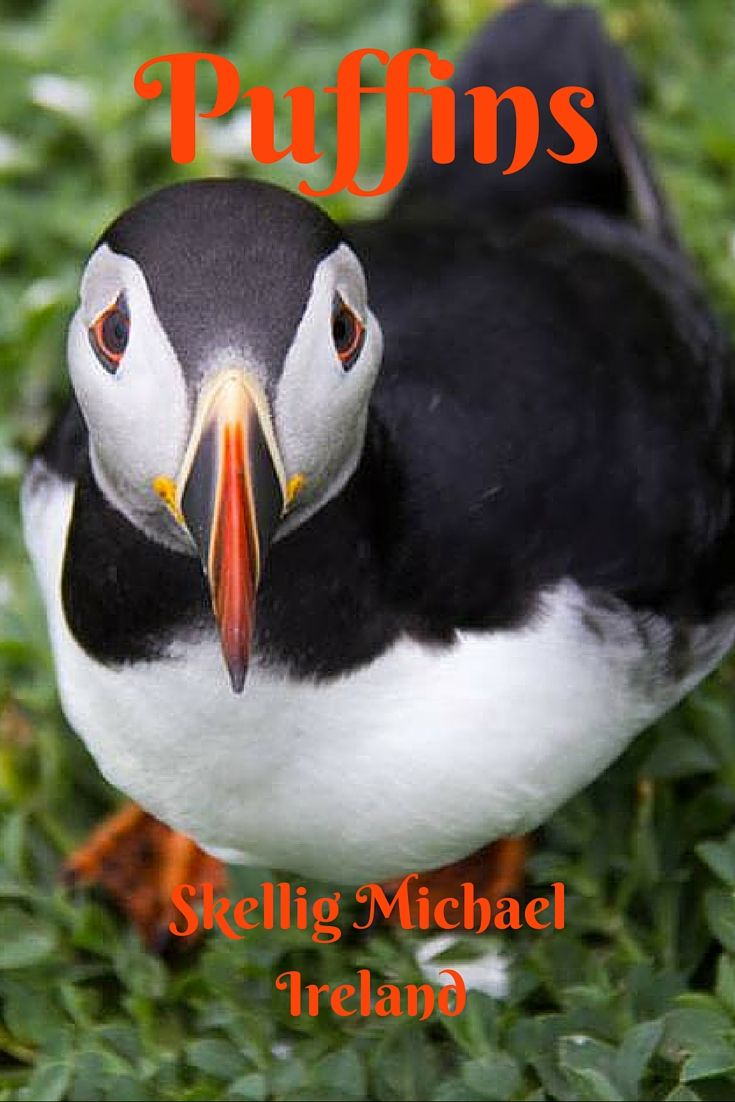 153 best puffin house images on pinterest animals animal