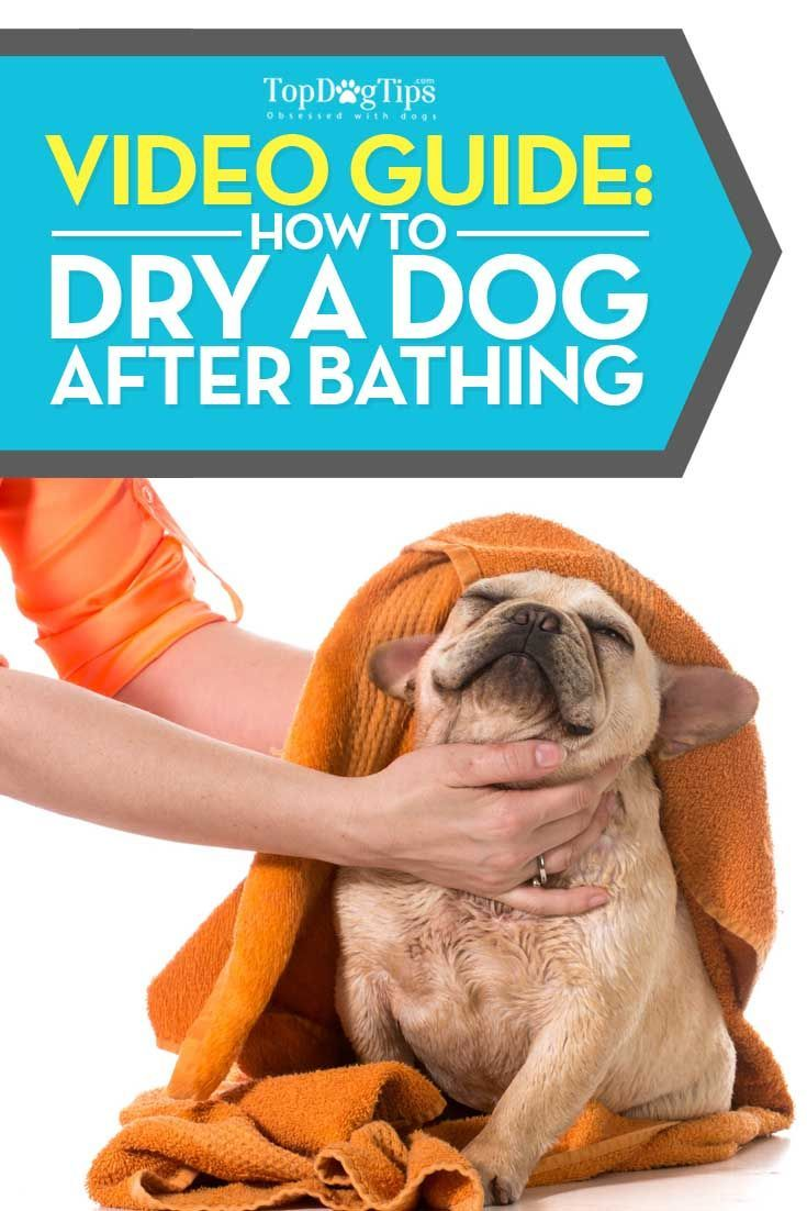How To Dry A Dog After Bathing Towel And Hairdryer Puppy
