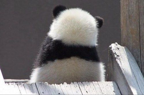 """I don't want to talk to you."" Panda"
