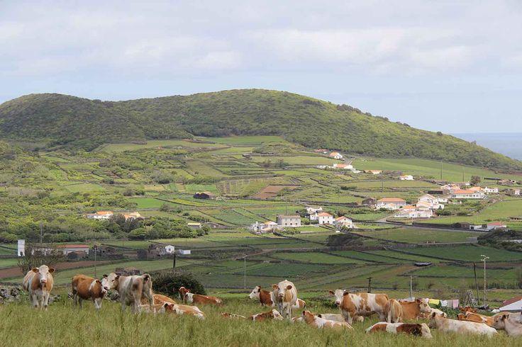 Graciosa Island, Azores. Photo by Leila Monteiro Lins. DISCOVER magazine.