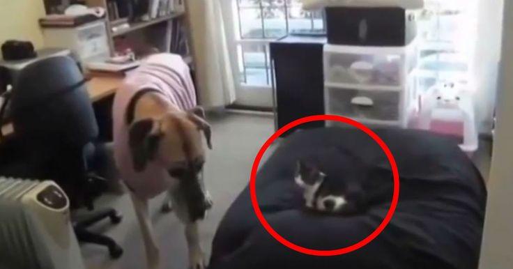 Katter kan ju vara rätt fräcka och tycka de äger världen. Men en hund gillar ju sin säng.