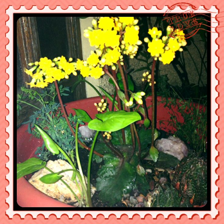 Más plantas!!!
