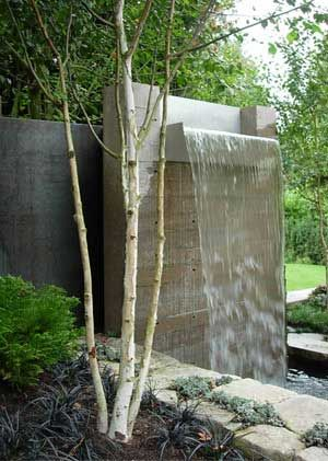 I like this simple yet dramatic waterfall in what appears to be a contemporary garden with the multi-stemmed birch underplanted with the black grass (Ophiopogon planiscapus 'Nigrescens').