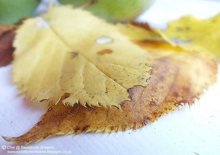 Sweetbriar Dreams: Five on Friday - Autumn's Here