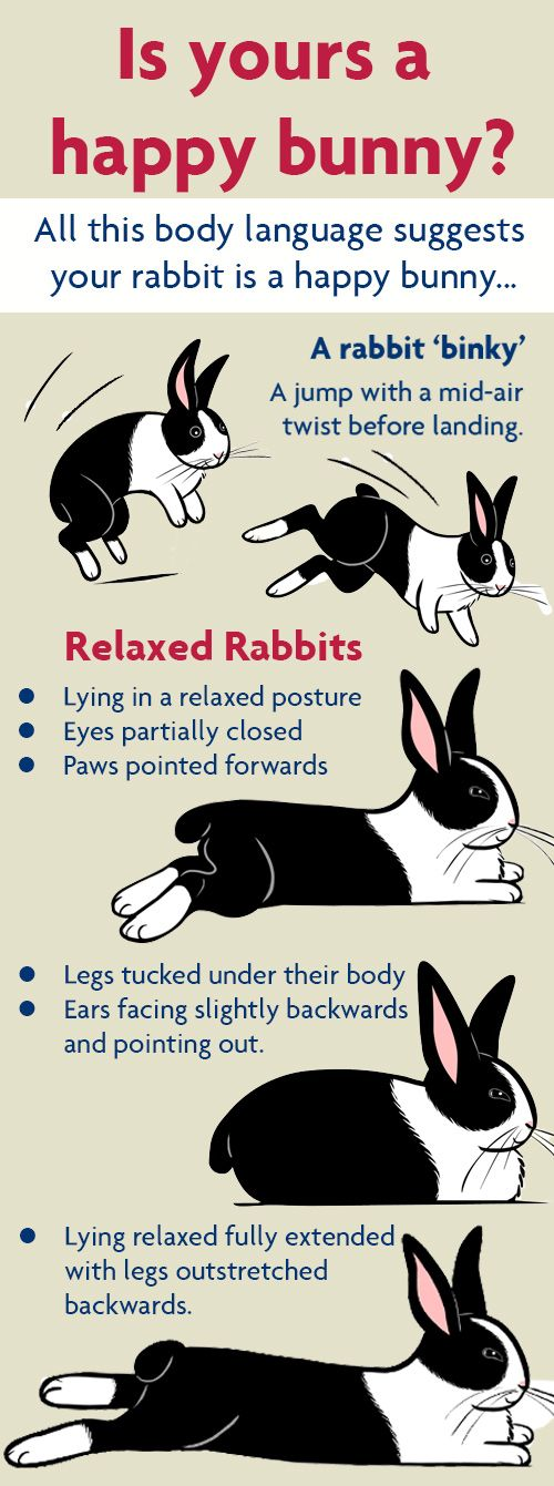 Is yours a happy bunny? Rabbit body language signs for a happy bunny
