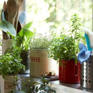 Ces quelques trucs vous aideront à dépoussiérer votre main verte et à démarrer un jardin d'hiver à l'intérieur.