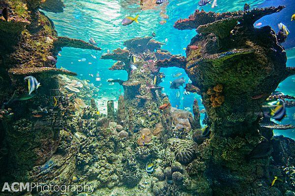 Visiting the NAUSICAA Aquarium in Boulogne Sur Mer, #France. http://cheeseweb.eu/2013/06/visiting-nausicaa-aquarium-boulognesurmer-france/