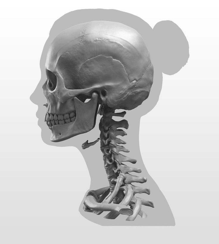 skull_female_side_New Masters Academy: Anatomy of the Head Series