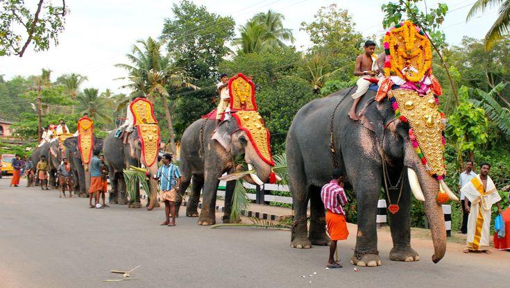 Decorated Kerala Elephants_8 | Beast of Burden | Pinterest ...