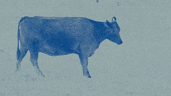 Blue Cow on Pale Blue Background by BlackbirdArtDesign on Etsy, $35.00