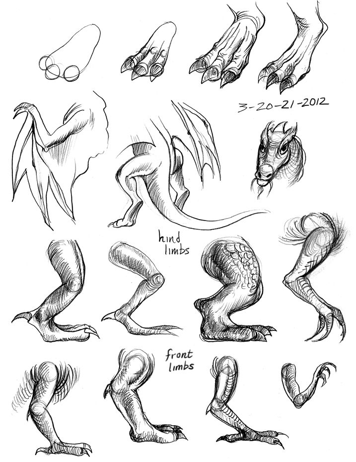 How to draw a dragon step by step dragons draw a dragon image result for dragon foot drawing ccuart Choice Image
