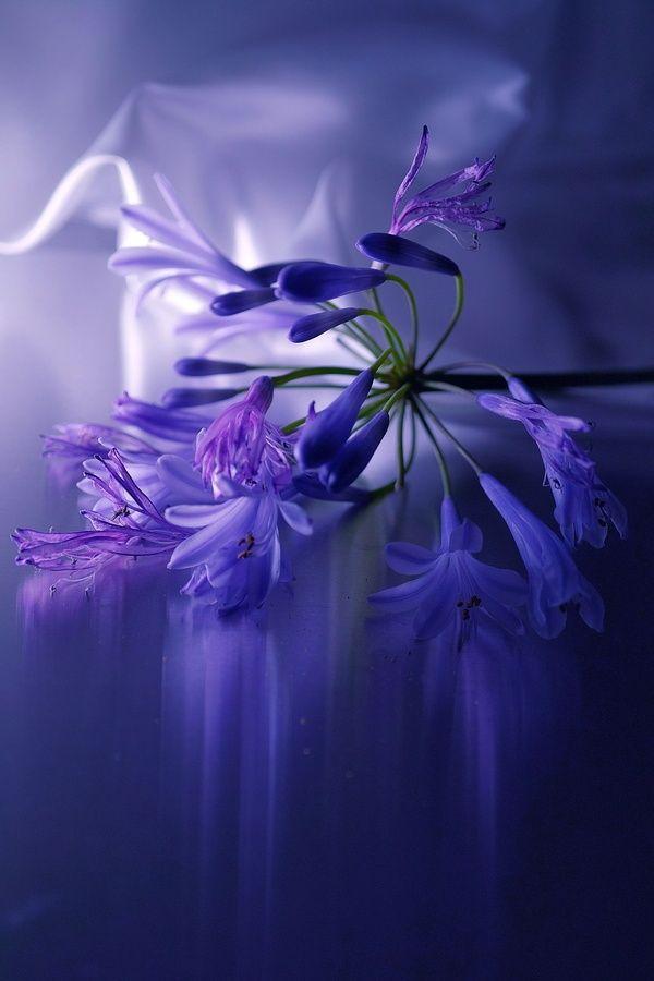美丽 的 紫