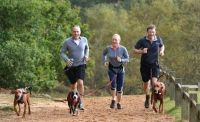 6 deportes divertidos para #perros #mascotas
