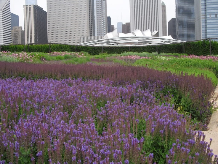 17 best images about lurie garden millenium park on for Lurie garden planting plan