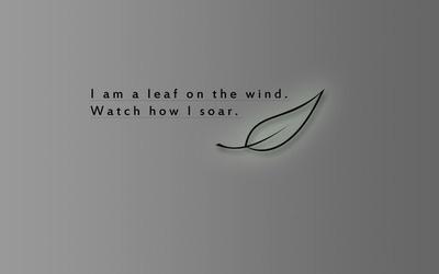 I'm a leaf on the wind. Watch how I soar.