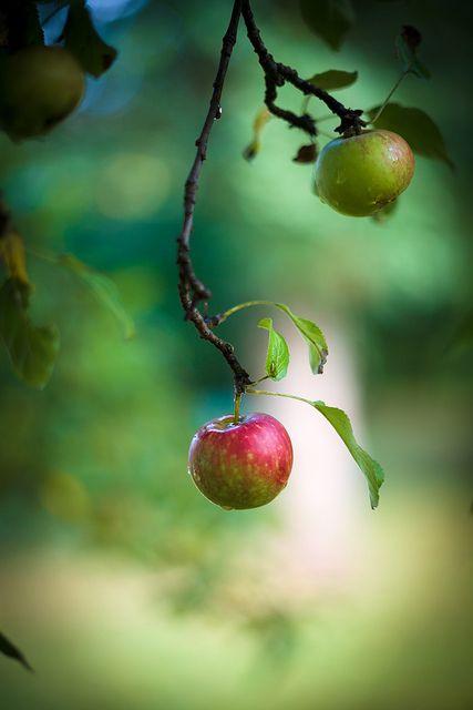Apfelzeit by Urmelchen, via Flickr