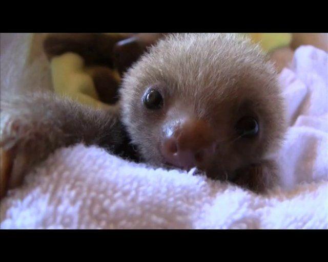 A adorable sloth orphanage