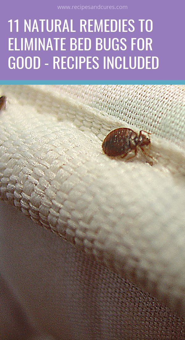 11 Natural Remedies to Eliminate Bed Bugs for Good