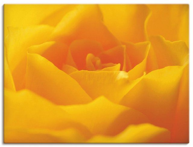 Leinwandbild »Gabi Siebenhühner: Gelbe Rose«