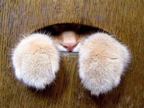 J'avais demandé une chatière, pas une ratière...