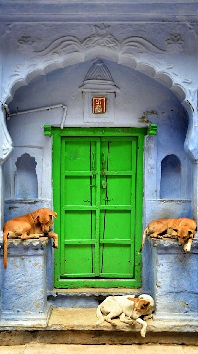 Peaceful dogs rest at this green door in Bundi, Rajasthan, India. - by didjayy