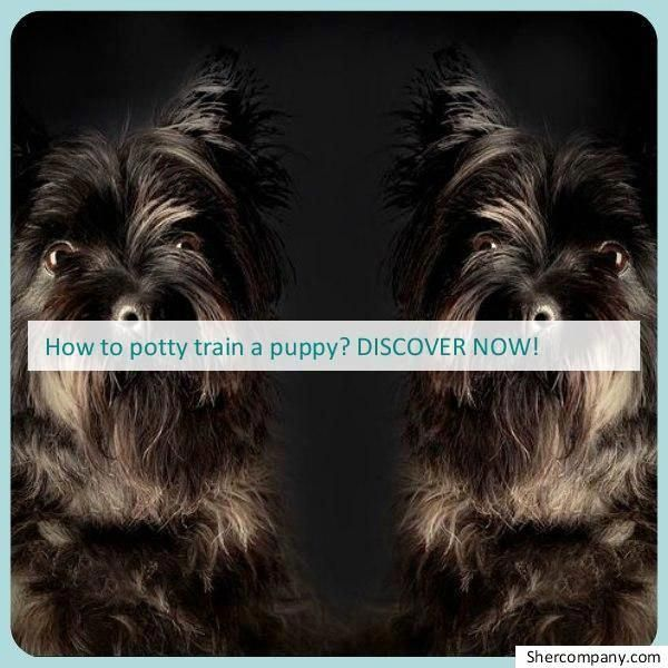 How To Stop Dog Aggression With Images Best Dog Training Books Dog Training Obedience Dog Training