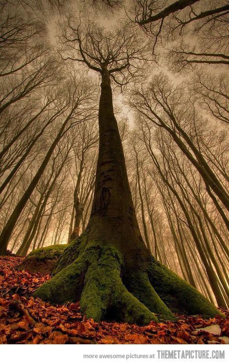 cool-awesome-tree-tall