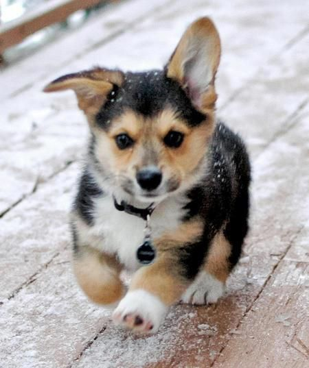 """Cute Puppy: """"And they said I wasn't brave enough to walk in the snow! Huh! I'll show them!"""""""