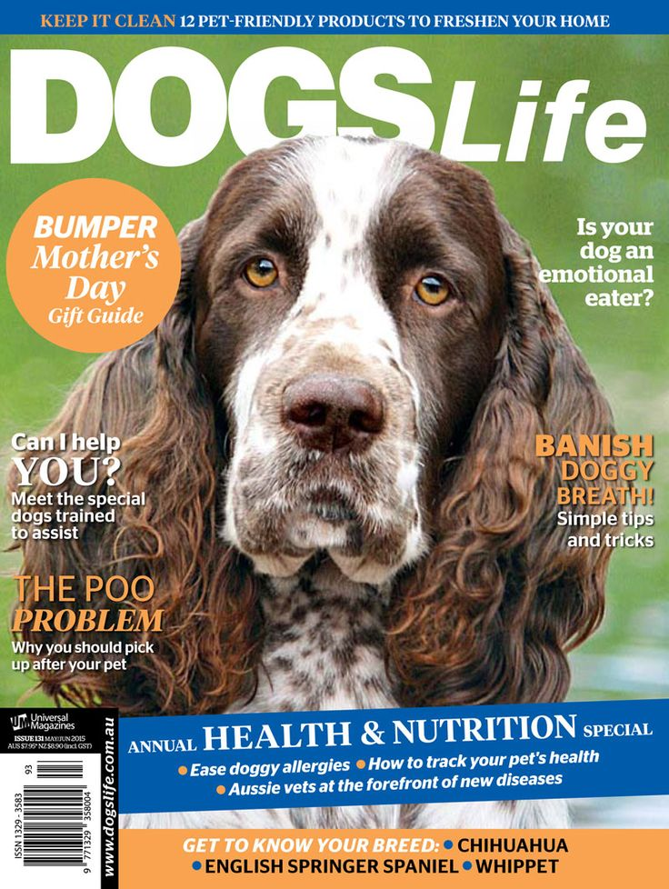 Our May/June Health & Nutrition special is out on stands! Don't forget to grab yourself a copy :) www.universalshop.com.au #dogslifemag