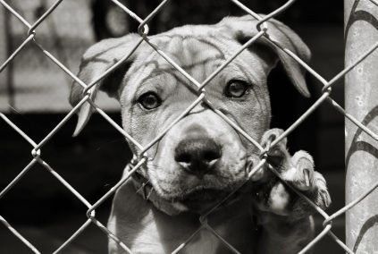 Adopt. Don't Shop. A shelter dogs love is  unconditional <3