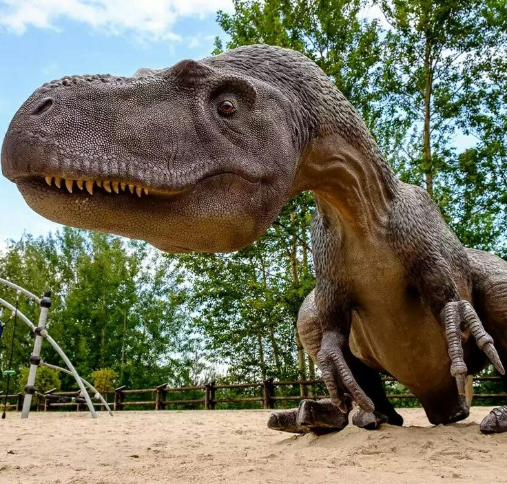 """Allosaurus is agenusof largetheropoddinosaurthat lived 155 to 150million years ago during thelate Jurassicperiod. The name """"Allosaurus""""means """"different lizard"""". The first fossil remains that can definitely be ascribed to this genus were described in 1877 by paleontologistOthniel Charles Marsh, and it became known asAntrodemus. As one of the first well-known theropod dinosaurs, it has long attracted attention outside ofpaleontologicalcircles"""