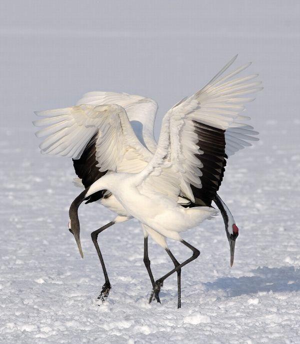 Crane Dance                                                                                                                                                                                 More