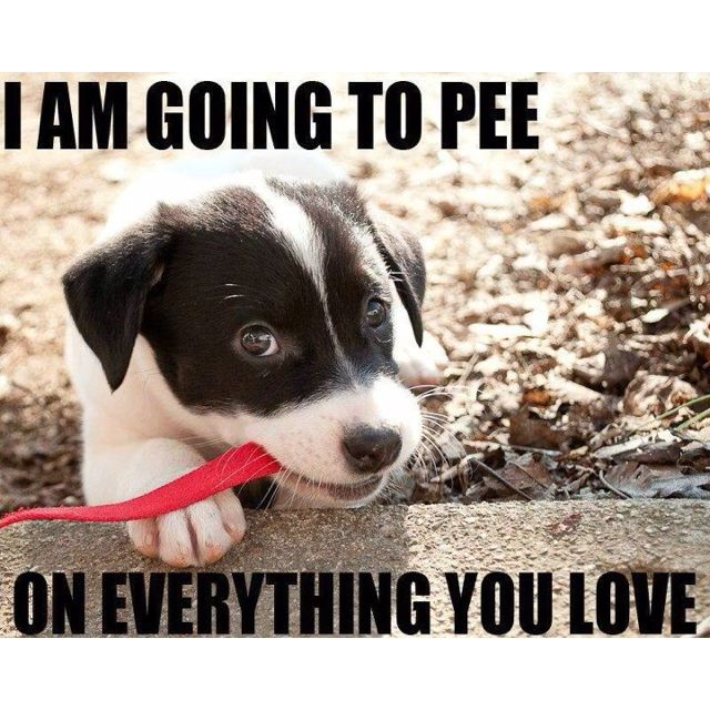 Sounds about right. I love puppies :): Animals, Dogs, Truth, Pet, Puppys, So True, Funny Stuff