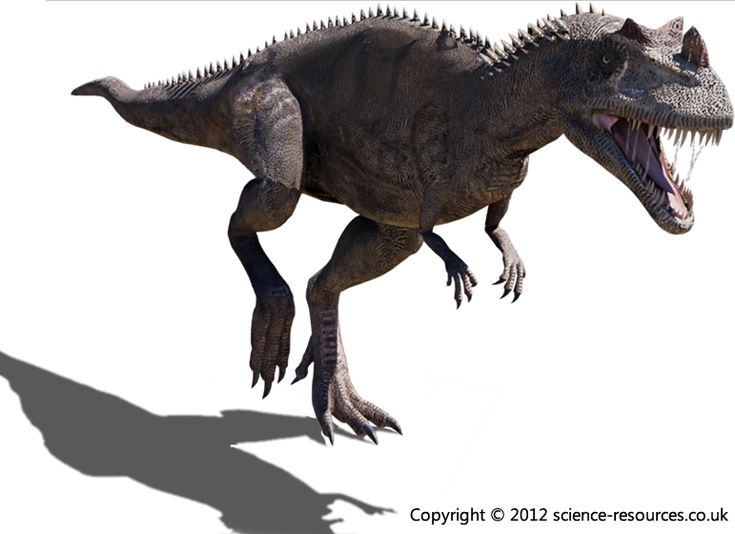 Ceratosaurus (Horned Lizard) Ceratosaurus was a medium sized meat-eater of the late Jurassic.