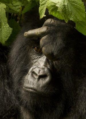 Opice mají k lidem blízko. Nebo lidé k opicím?
