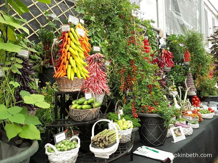 W. Robinson & Son's colourful vegetable exhibit, in The Great Pavilion, at The RHS Chelsea Flower Show 2016.