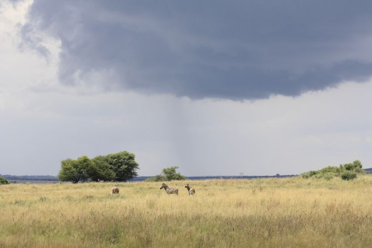 Rain on a savannah plain in the Dome Photo credit: : Tracey Fourie