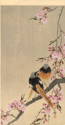 Охара Косон. Горихвостки на ветке сакуры