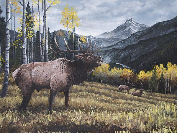 Acrylic Painting of a bull elk bugling in the mountains - Aaron Spong