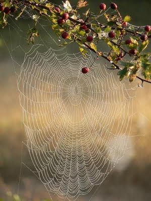 Sacred geometry in nature is everywhere we look s in this spider's web.
