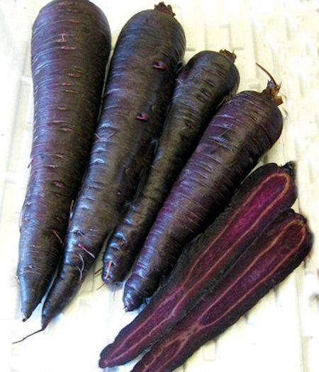 Biennial purple carrots in zone 3.  We mulch our hardy carrots with straw for next summer rare seed harvest.