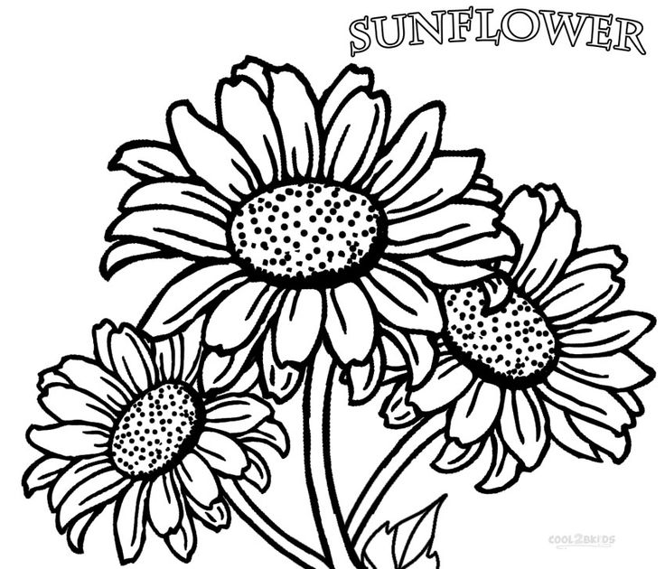 Printable Sunflower Coloring Pages