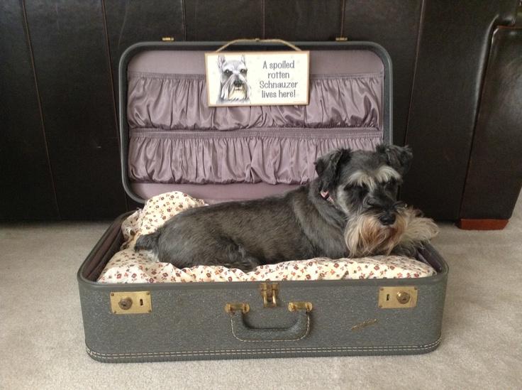 Cute diy suitcase dog bed!